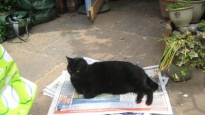 Sooty settled down with the paper.