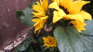 Spot the caterpillar.