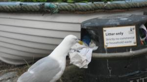 Seagull on recycling duty