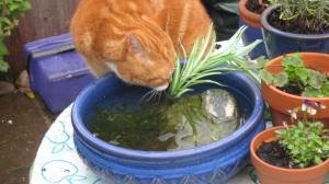 Oscar decides to drink from the pond.