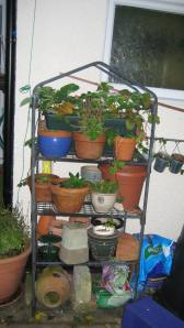 Shelves protecting the strawberry plants from the slugs and snails.