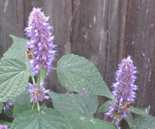 bees on plants