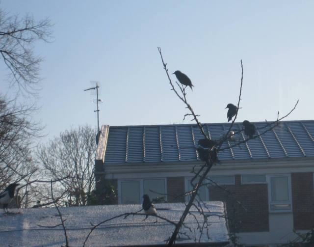 Birds queuing in the tree.